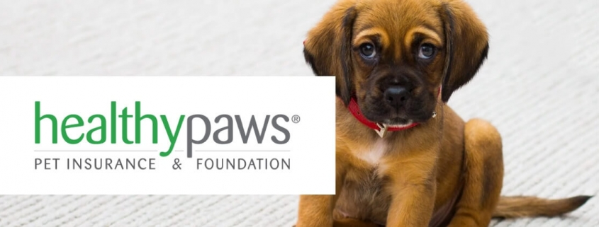 Healthy Paws Pet Insurance