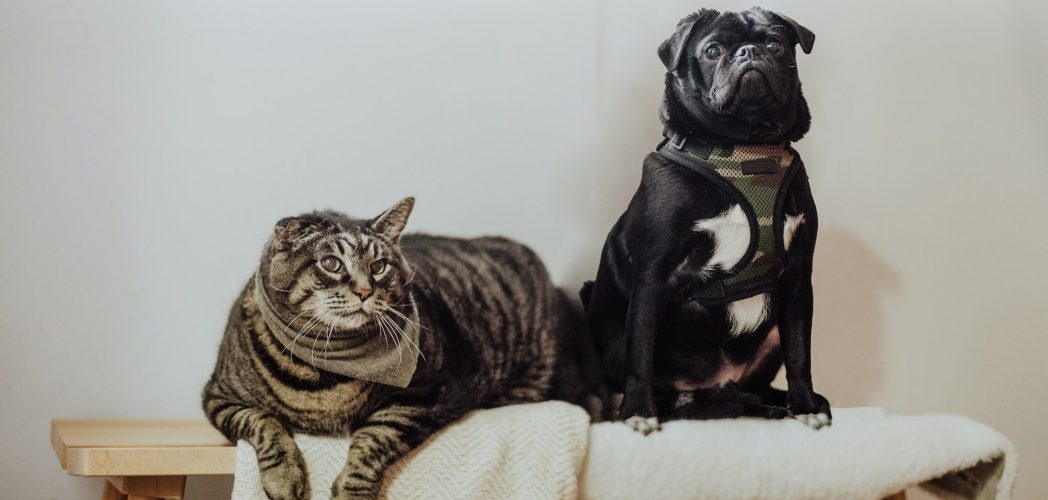 Cat and dog looking at their owners